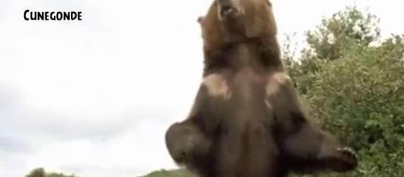 ours les visiteurs EVG Intripid les visiteurs