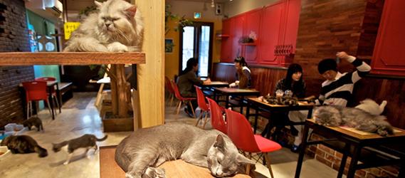 le café des chats sorties insolites paris