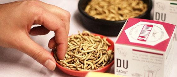 Parcours défis intégration dégustation insecte jimini's