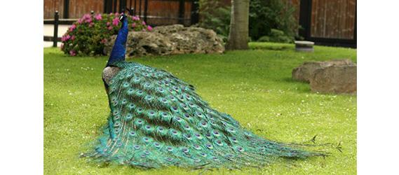 O voir les animaux paris for Jardin animaux paris