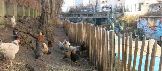 la recyclerie poules paris underground
