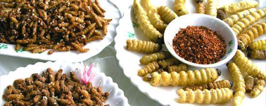 insectes défi foodporn intripid