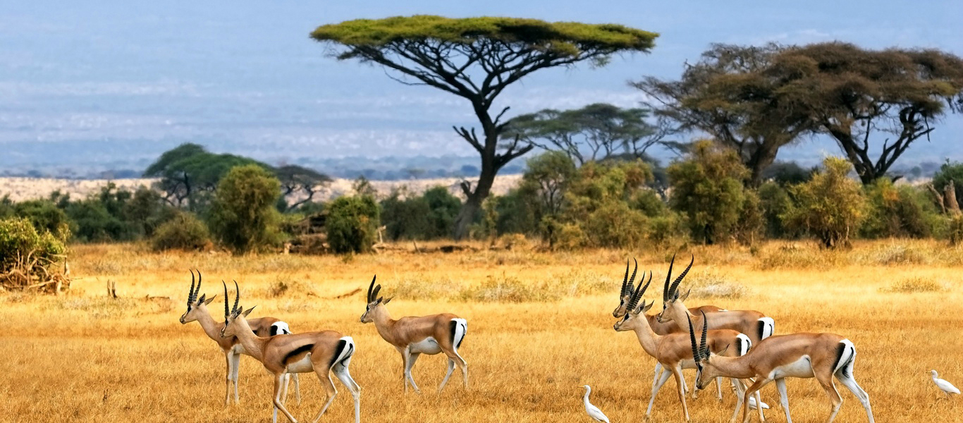 Sortir à Paris - L'Afrique