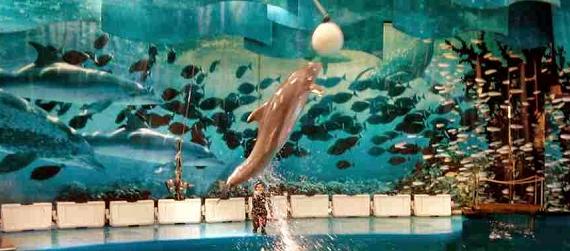 Visitar Barcelona con niños-Zoo Intripid